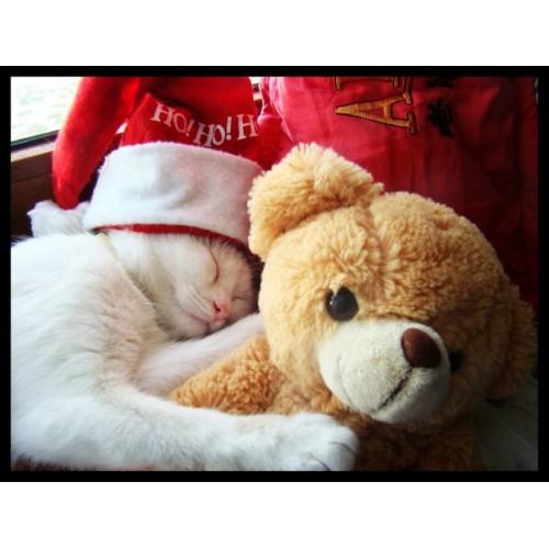 Dual teddy