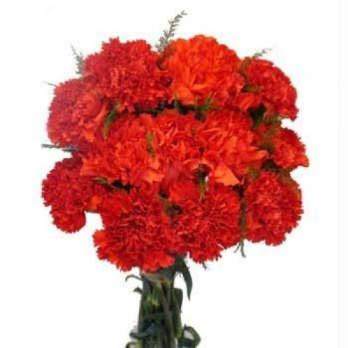 Carnations bunch